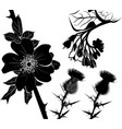 collection flower plants comfrey milk thistle vector image