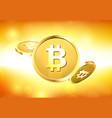gold bitcoins on orange background vector image
