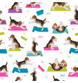 yoga dogs poses and exercises beagle seamless vector image vector image