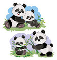 panda bear characters cartoon vector image