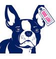 dog french bulldog hot dog vector image vector image