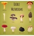 Edible mushroom vector image
