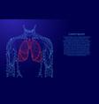 man torso lungs anatomic organ inside medicine vector image
