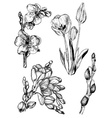Set of Hand Drawn Flower Icons vector image