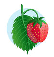 Strawberry on blue background vector image vector image