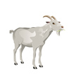 White Goat2 vector image vector image