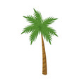 palm tree tropical plant natural image vector image