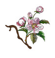 apple tree branch vector image vector image