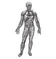 principal organs of the thorax and abdomen vintage vector image vector image
