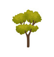 flat icon of autumn tree with many branches vector image