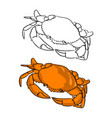 orange round crab sketch vector image