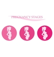 Pregnancy stages Pregnant woman vector image vector image