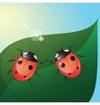 two ladybugs vector image vector image