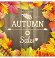 Autumn sale typography poster EPS 10 vector image