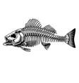 bass fish skeleton monochrome concept vector image