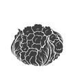 cauliflower glyph icon vector image vector image