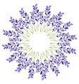 lavender flower star on white background vector image vector image