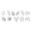 line drawing leafs palm tree modern vector image vector image
