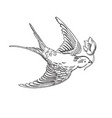 sketch flying contour bird vector image