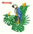 parrot and tropical leaves summer time concept 3d vector image