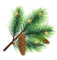 realistic fir tree branch with cone and vector image vector image