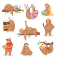 Sloth slothful animal character playing or