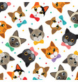 cats amp friend pattern vector image vector image