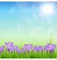 Crocuses nature background vector image vector image
