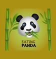 funny eating panda logo vector image