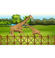 Giraffes in the forest vector image vector image