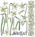 set of hand drawing narcissus flowers vector image vector image