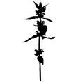 grass flower vector image