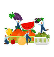 farmers and fruits harvest time vector image
