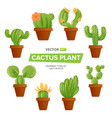 green mexican cactus plant or cacti succulent in vector image