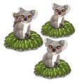 koala bears family sits on leaves animals vector image vector image