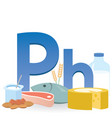 phosphorus rich foods vector image