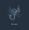 zodiac constellation scorpion in engraving vector image vector image