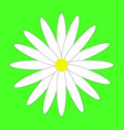 chamomile on the neon green background vector image vector image