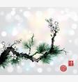 green pine tree branch and white sakura cherry vector image vector image