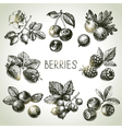 Hand drawn sketch berries set of eco food vector image
