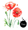 hand drawn watercolor poppy painted sketch vector image