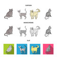 persian cornish rex and other species cat breeds vector image vector image