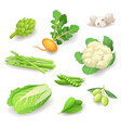 fresh organic vegetables icon set isolated vector image