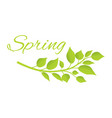 spring and tree branch with green leaves on poster vector image vector image