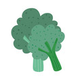 broccoli vegetable fresh nutrition food isolated vector image vector image