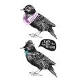 dressed up starling couple vector image