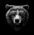 monochrome portrait a brown bear looking ahead vector image