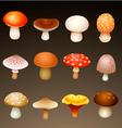 mushrooms vector image vector image