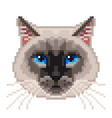 pixel siamese cat face isolated vector image vector image