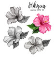 realistic hibiscus flower leaves monochrome vector image